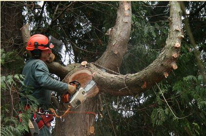 Tree Service Pasadena, CA