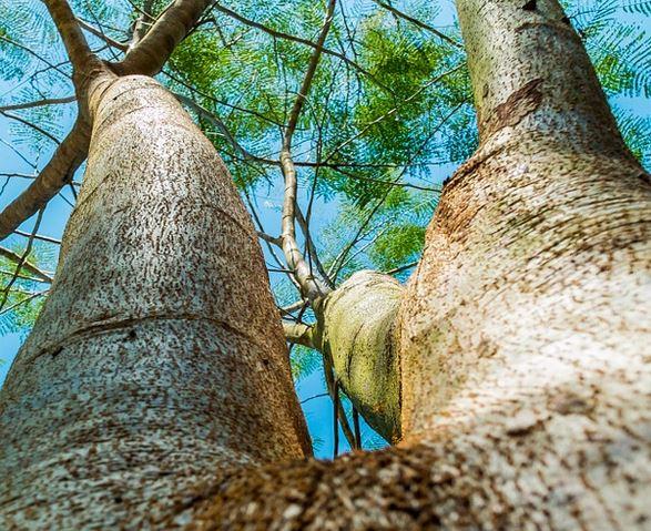 Pasadena, CA Tree Service